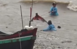 Bão số 10 cuốn trôi hàng nghìn ha nuôi trồng thủy sản ở Thanh Hóa