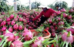 Lợi thế của trái cây Việt Nam