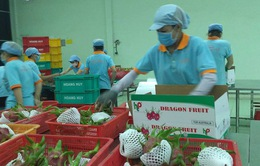 Việt Nam xuất khẩu thanh long tươi sang Australia