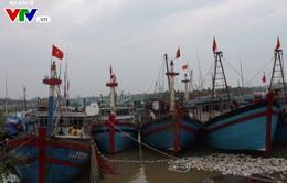Thanh Hóa còn 3 phương tiện tàu thuyền với 33 lao động chưa liên lạc được