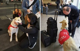 Mỹ: Liệu pháp chó giúp hành khách vui vẻ ở sân bay