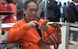 Hiểu cảm xúc của vật nuôi bằng… áo khoác