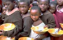 Hậu COVID-19, thế giới đang đối mặt với khủng hoảng lương thực?