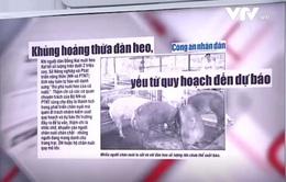 Khủng hoảng thừa đàn lợn: Vì đâu nên nỗi?