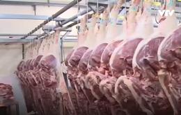 Sức mua và giá thịt lợn giảm sau vụ tiêm thuốc an thần