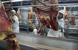 63 đối tượng bị buộc tội trong bê bối thịt bẩn ở Brazil