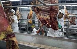 Chính phủ Brazil phát lệnh thu hồi thịt nghi vấn