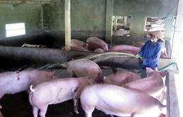 Chỉ số tiêu dùng tháng 7 tăng do giá thịt lợn tăng