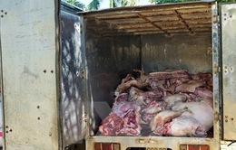 Tiêu hủy hơn 500kg thịt lợn chưa qua kiểm dịch