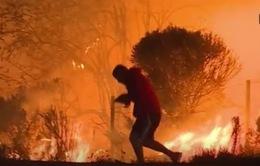 Thanh niên gây sốt mạng xã hội vì liều mình cứu thỏ khỏi cháy rừng