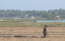 Thời tiết thất thường ảnh hưởng vụ Đông Xuân tại Quảng Nam