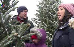 Thông Noel và ý nghĩa mùa Giáng sinh ở Mỹ