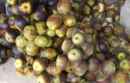 Nhớ mãi hương vị thốt nốt vùng Bảy Núi ở An Giang