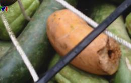Vĩnh Phúc: Phụ huynh phát hiện gần 100kg thực phẩm bẩn được đưa vào trường học