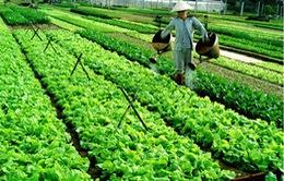 Việt Nam đã nhập hơn 4.000 tỷ đồng thuốc trừ sâu