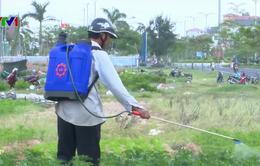 Người dân Phú Yên sống chung với mùi thuốc trừ sâu từ vườn hoa Tết