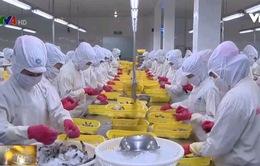 Sẽ chấm dứt sử dụng thức ăn chăn nuôi có kháng sinh