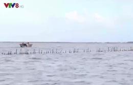 Thừa Thiên Huế xây dựng các khu bảo vệ thủy sản