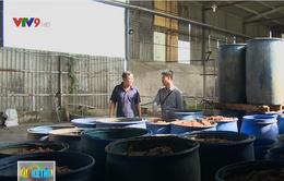 Vì sao công ty chế biến phế phẩm thủy sản gây ô nhiễm trong thời gian dài?