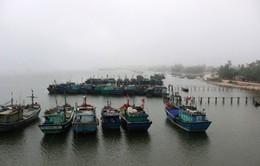 Mô hình đồng quản lý nguồn lợi thủy sản phát huy hiệu quả