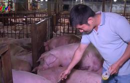 Phát hiện cơ sở giết mổ tiêm thuốc an thần cho gần 5.000 con lợn