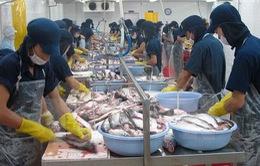 Xuất khẩu cá tra tăng trưởng mạnh nhưng vẫn gặp nhiều bất lợi