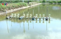 Nông dân nuôi tôm miền Trung khó khăn đủ bề sau lũ