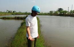 Trà Vinh thiệt hại 250 triệu con tôm do dịch bệnh