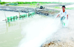 Hà Tĩnh: Hơn 220ha hồ tôm bị nhiễm bệnh đốm trắng