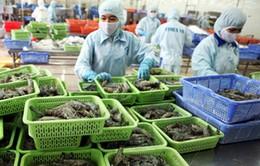 Lệnh cấm nhập khẩu tôm của Australia gây thiệt hại cho Việt Nam