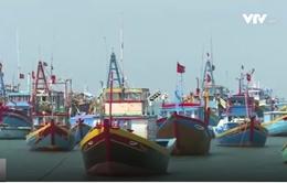 Bình Thuận ra quân dỡ bỏ bẫy tôm hùm