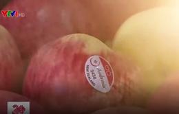 Dễ dàng mua tem dán lên trái cây nhập khẩu