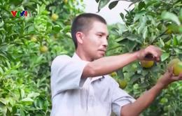 Nâng cao chất lượng sản phẩm tham gia Ngày hội trái cây Lục Ngạn