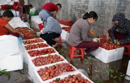 Liên kết để mở rộng thị trường cho trái cây Việt