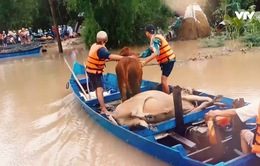 Tết vùng lũ: Cận cảnh ngày mới ở nơi lũ lụt vừa đi qua