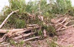 Hơn 10ha rừng tràm ở Đồng Nai bị đốn hạ trong một đêm