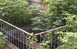 Hà Nội: Nhiều trạm xử lý nước thải công nghiệp bị bỏ hoang