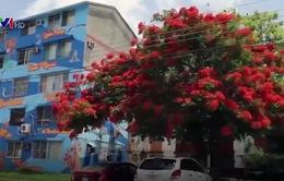 Những bức tranh tường màu sắc chống nạn bạo lực tại Mexico