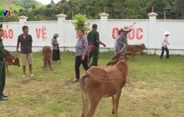 Trao bò giống cho người nghèo vùng biên