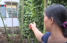 Nan giải đấu tranh với tình trạng trộm cắp ở vùng nông thôn Bà Rịa - Vũng Tàu