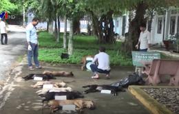 Trà Vinh bắt 2 đối tượng trộm 9 con chó trong đêm
