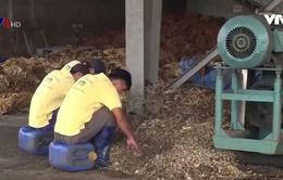 """Nhà máy """"đau đầu"""" vì nông dân lén bỏ tạp chất để tăng trọng lượng mủ cao su"""