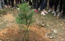 Ngày hội trồng cây tại Vườn Quốc gia Ba Vì
