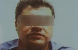 Mexico bắt đối tượng nghi là trùm băng đảng ma túy