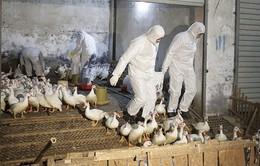 Nguy cơ lây lan cúm gia cầm H7N9 giữa người và người là thấp