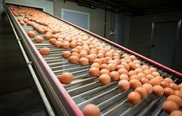 """Thêm một quốc gia châu Âu phát hiện """"trứng bẩn"""""""