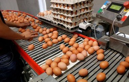 """Bê bối trứng """"bẩn"""" tại châu Âu tiếp tục lan đến Đài Loan (Trung Quốc)"""