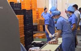 TP.HCM truy xuất nguồn gốc gà và trứng gia cầm