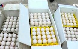 Thu giữ 24.000 quả trứng gà nhập lậu tại Quảng Ninh