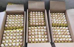 Bắt 18.000 quả trứng gà nhập lậu